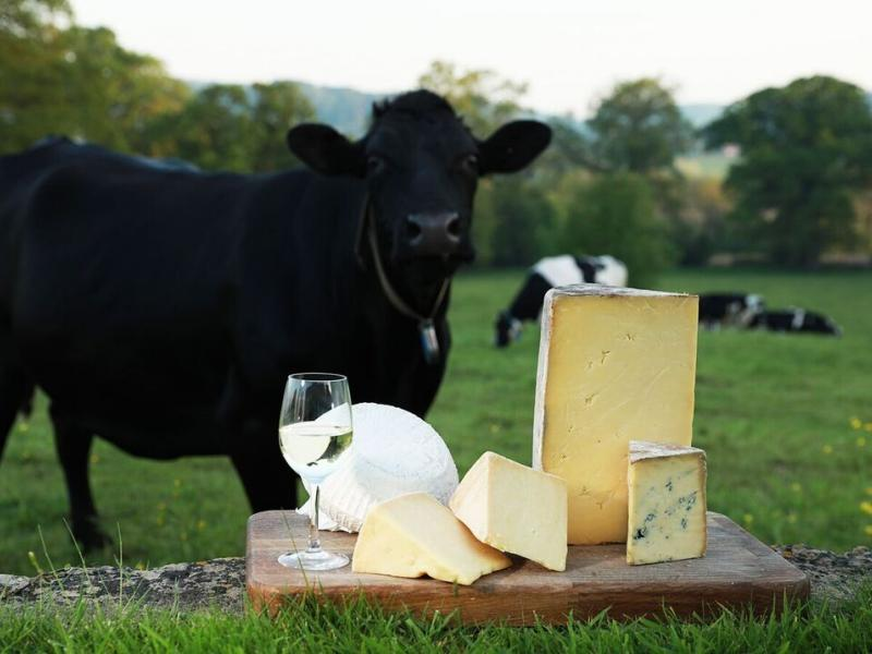 "Cheese Odyssey Tours for Cheese Lovers and ""All You Can Eat"" Cheese Parties"